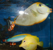 House of Tropicals Salt Water Fish Example