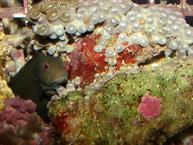 t-coralandfish